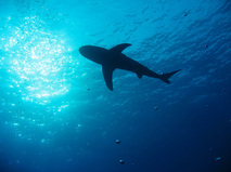 Купание с китами-убийцами