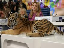 Амурский тигренок по имени Мур