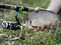 Добыча. Рыба
