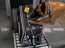 Досмотр багажа кинологической службой таможни