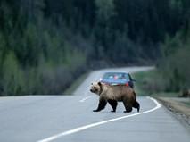 Медведь на дороге