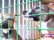 Приют для бездомных животных в Щербинке