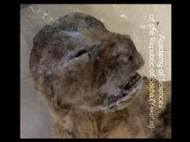 Останки пещерных львят возрастом более 10 тысяч лет