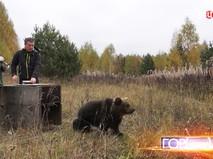 Медведицу Викторию выпустили на волю