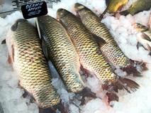 Свежая рыба на прилавке