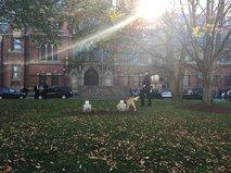 Поиск бомбы в кампусе Гарварда