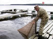 Разведение сибирского осетра в Новгородской области