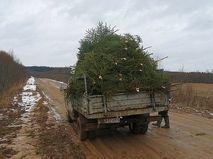 Грузовик с елками