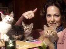 """Новогоднее кино. """"Отдам котят в хорошие руки"""""""