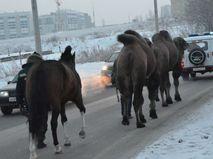 Брошенные в Красноярске животные
