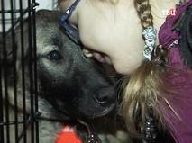 Собака на выставке животных из приютов