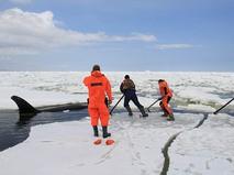 Сотрудники МЧС России проводят операцию по спасению косаток в Охотском море