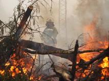 Сотрудник пожарной службы во время тушения лесного пожара