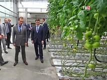 Председатель правительства РФ Дмитрий Медведев во время посещения сельскохозяйственного предприятия