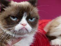 Кот по кличке Grumpy Cat
