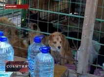 Уцелевшие животные после пожара
