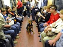 Бездомная собака в вагоне метро