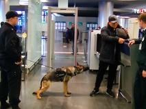 Кинологическая служба в аэропорту