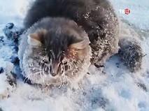 Вмерзший в лед кот
