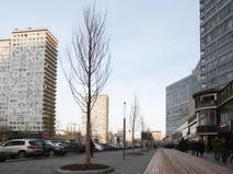 Высадка деревьев на улице Новый Арбат