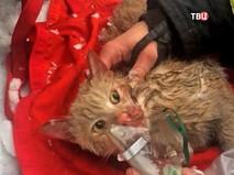 Спасенный из горящей квартиры кот