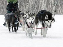 Фехтование на колясках и езда на собачьих упряжках