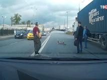 Водители помогают уткам перейти дорогу