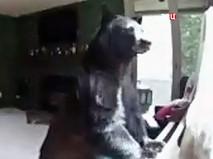 Медведь забрался в дом в США