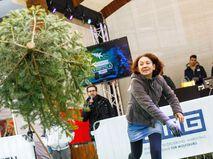 Чемпионат по метанию елок