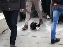Кот улегся перед эскалатором