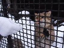 Степной кот в Московском зоопарке