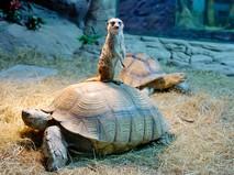 """""""Медленно, но верно: всё о черепахах"""""""