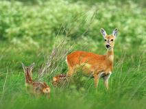 Секреты из жизни животных