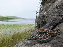 Энциклопедия. Змеи