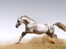 Энциклопедия. Лошади