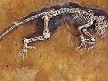 Эволюция жизни на Земле. Теория эволюции. Серия 1