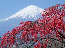 Атлас Дискавери. Открывая Японию