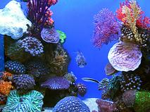 Жители океанов. Народ рифов. Серия 3