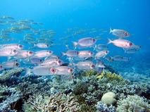 Жители океанов