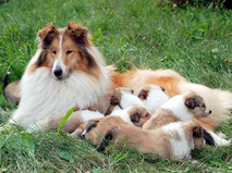 Энциклопедия собак