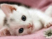 Самые милые кошки