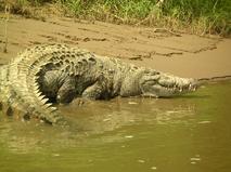 Энциклопедия. Крокодилы