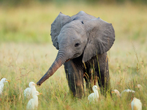 Маленькие чудеса природы