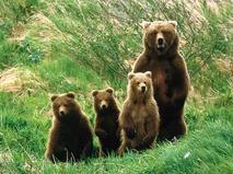 Звериная семья