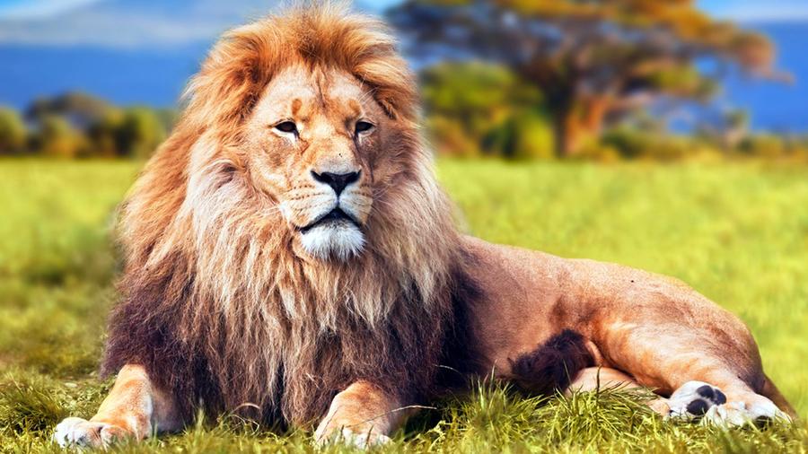 Межвидовой секс львица человек