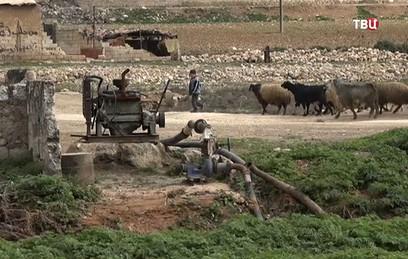 Ферма в Сирии