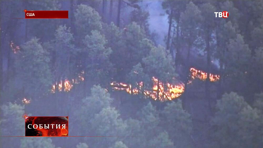 Лесной пожар в США