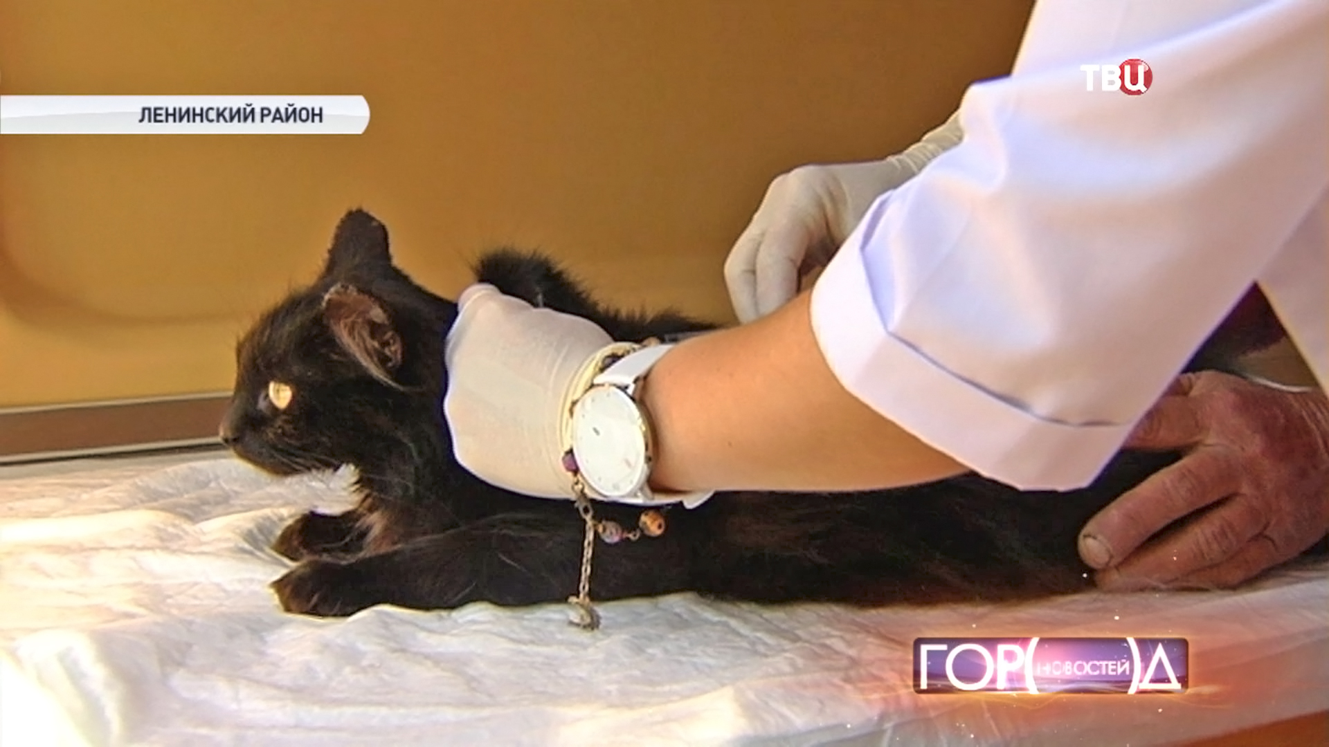 Кошке делают прививку от бешенства