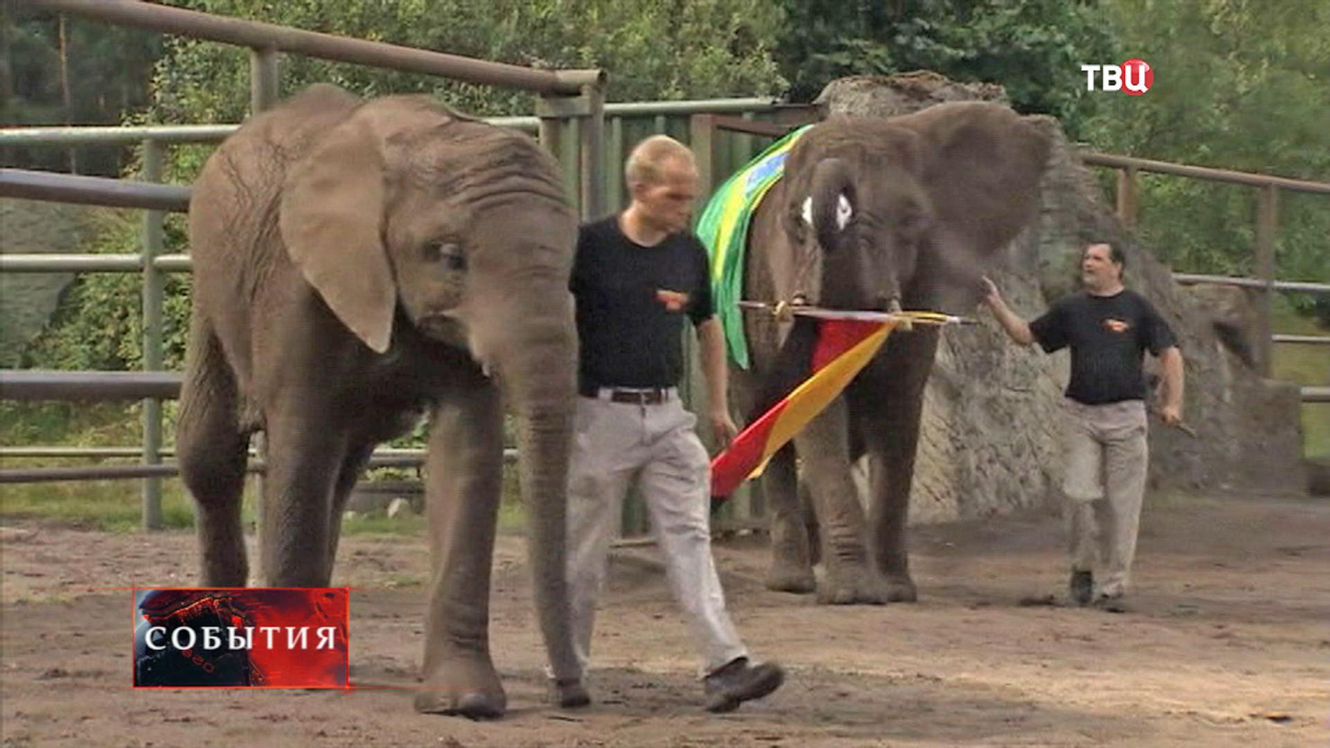 Слоны-футболисты