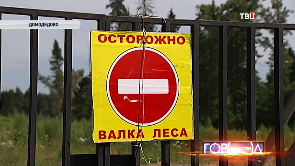 Валка леса в Домодедовском районе